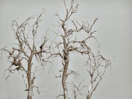 dead branches by Korpsus