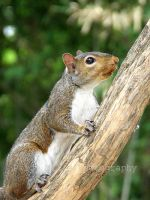 Searching for a nut... by PaigeMills