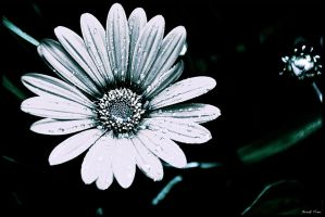 Ice Flower by BreakFreePhotography