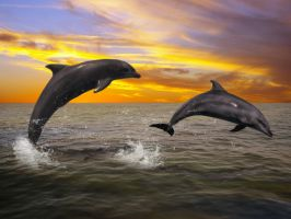 Dolphins at Sunset by AMDG-graphics