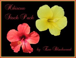 hibiscus_flower_stock_pack by EveBlackwood