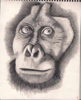 Monkey drawing-Drawing class by Haileyjo13
