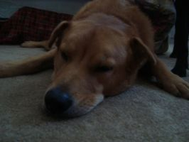 Rosco Sleeping by musicismylife78