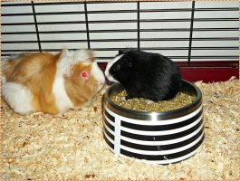 Get out of that food bowl, I'm hungry! by JDM4CHRIST
