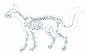 Fox Skeleton by Mirrade