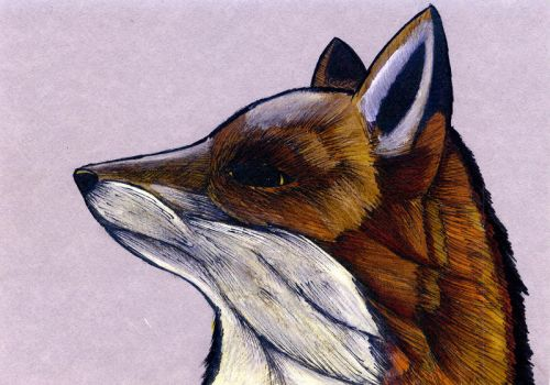 Cutting Edge Fox by theRealSEA