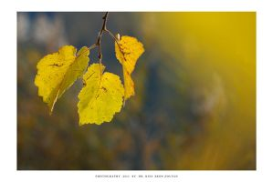 Autumn in Malomvolgy - IV by DimensionSeven