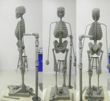 Ecorche - Lower Extremity Legs by JRfuentez