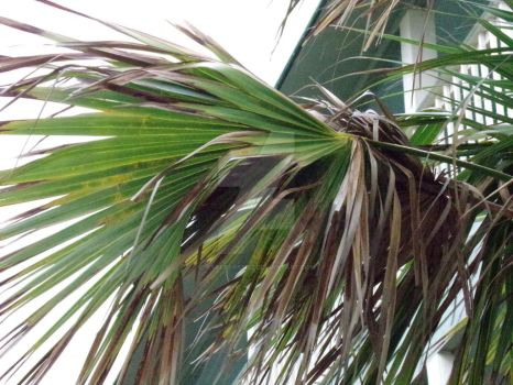 Palmetto Leaves by Warfreaksis2