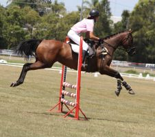 STOCK Showjumping 440 by aussiegal7