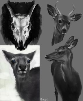 Deer Study by VaiFlow