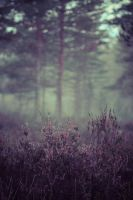 heather in the mist by LilyRedHaired