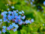 Blue Flowers by Inguan