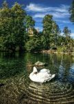 Swan Lake - Schwansee by pingallery