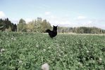 Jumping in the clover field by why-you-are-shy