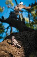 Pigeon Tree by mister-kovacs