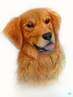 Golden Retriever by AriellaMay
