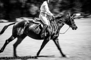 horse canter movement by dressageart13
