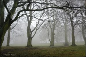 Locke Park in the Mist 12 by squareprismish