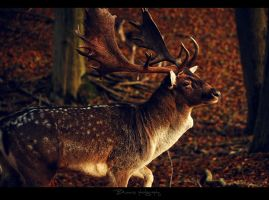 The king of forest. by Bunnis