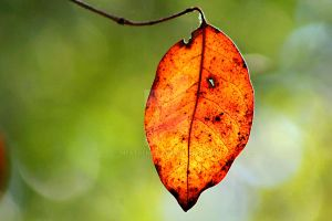 A Blazing Leaf by NextGenT3i