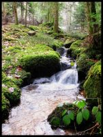 A forest brook by Discomax