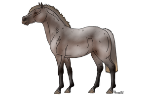 Appy mare by PauseOff