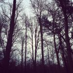 Balbirnie Woods by fourteenthstar