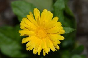 Stock: Yellow Flower by Think-Outside-Of-Box