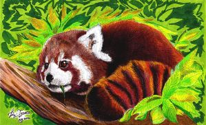 Red panda.4 (Finished) by hidden-by-art