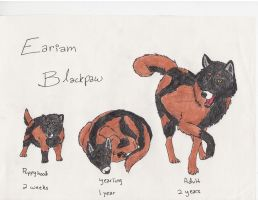 Eariam Blackpaw 2 by Migoto-Ookami