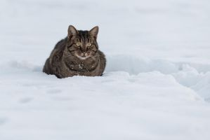 Tigger Camping out in the Snow by PLutonius