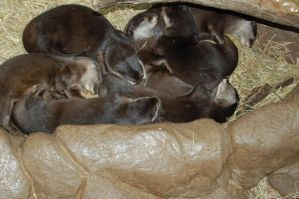 Pile of otters by TheCheeseCannibal