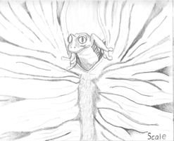 Red Eyed Tree Frog drawing by iamtherealbender