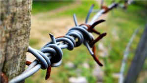 Barbed wire by urosch