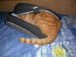 My cat in my computer bag by vampire-fede