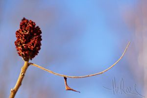 Death Of A Season - Sumac Majiggy by Shes-All-Smiles