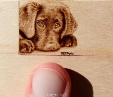 Dog - mini woodburning by brandojones