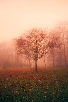 Foggy Scene II by jva3