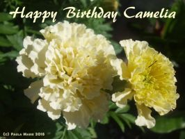 Happy Birthday Camelia by youlittlemonkey