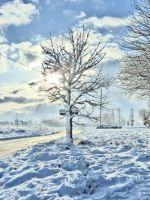 The tree as seen in winter by Hixybabes