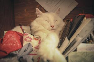 white cat by sterta