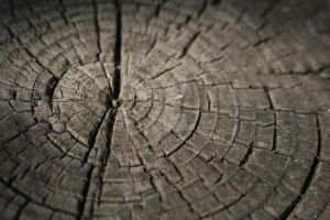 Lines on a Log by circathomas05