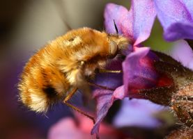Beefly by Alliec
