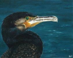 Devon Wildlife: Great Cormorant by odontocete