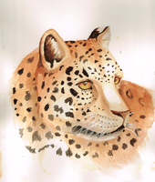 Leopard watercolor by Okamimusume