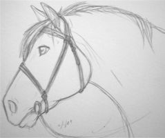 horse sketch by ANBU-Flashez
