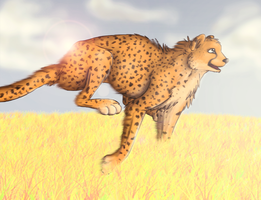Cheetah by Tikonka