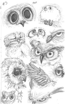 Study 03 Owls by Carotah