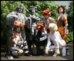 Cats costumes 4 by Rollwurst